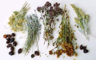 Лечение холецистита травами