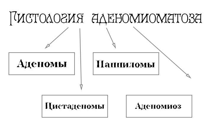 классификация по гистологии
