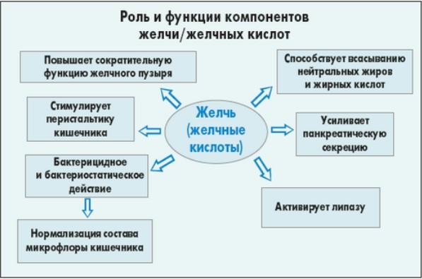Функции желчи в организме