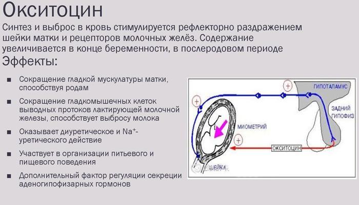 Определение окситоцина