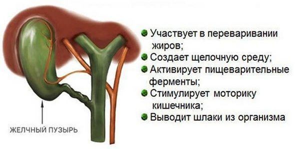 Функции ЖП