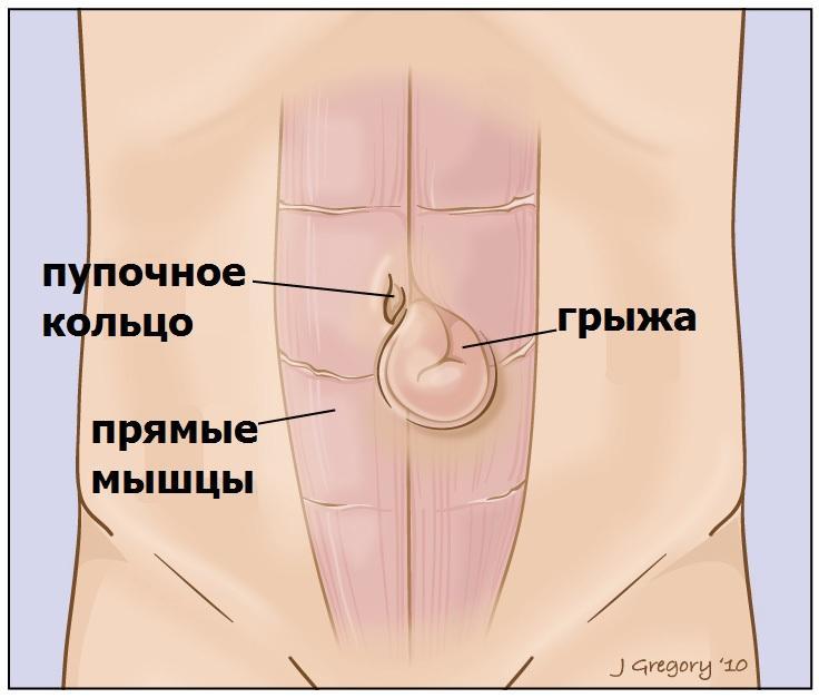 Анатомия пупочного кольца