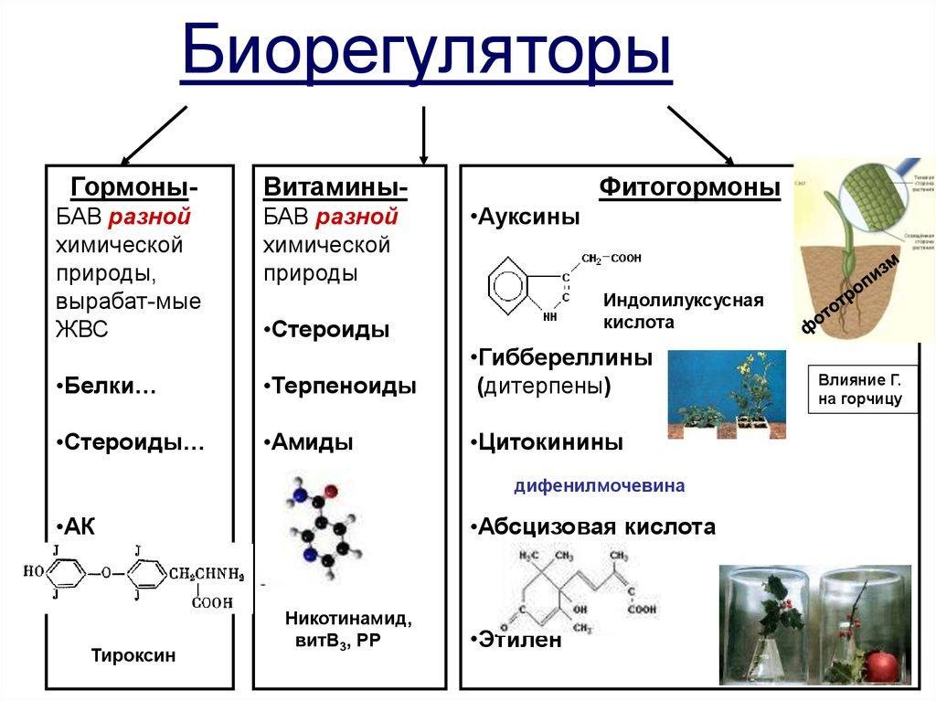 Гепатопротекторы животного происхождения